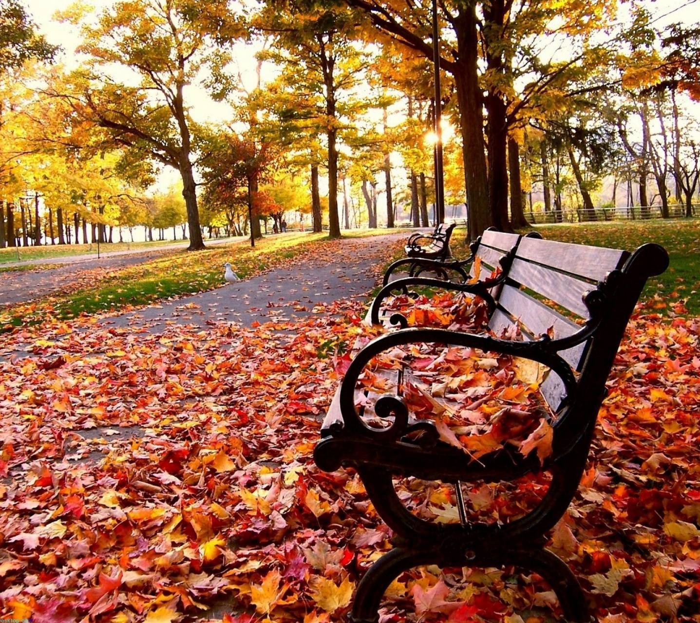 Autumn- Bench