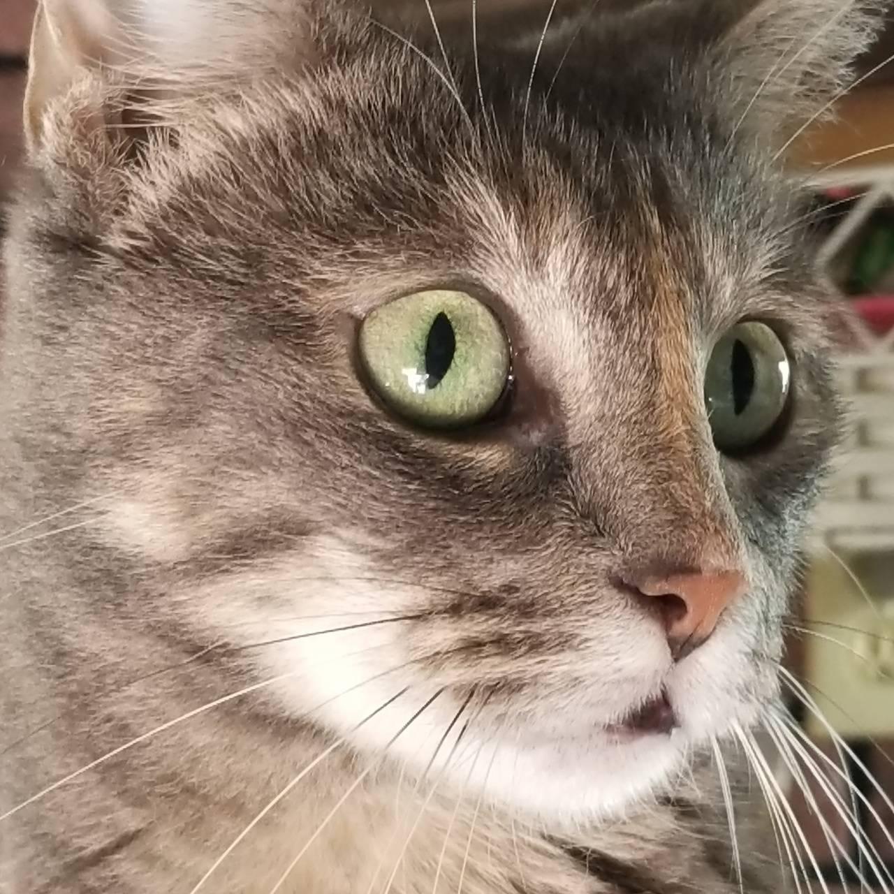 Supermodel kitty