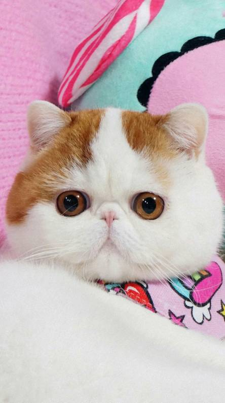 Cute Cat Wallpapers Free By Zedge