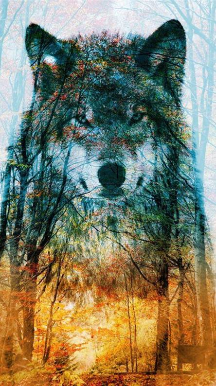 WOLF AND TREE