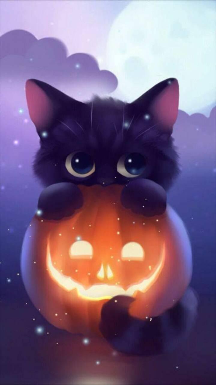 Cute pumpkin cat