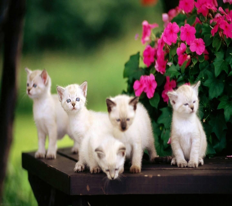 sweet babies cat