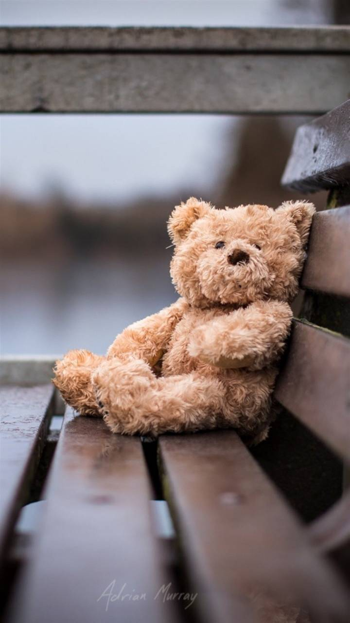 Lonely Bear
