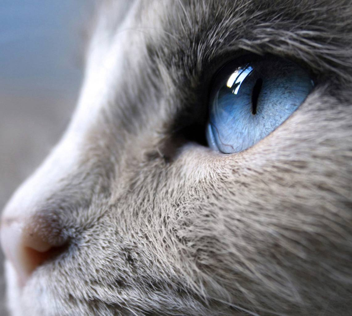 Blue Cat Eye Wallpaper By Johnny8123 Ec Free On Zedge