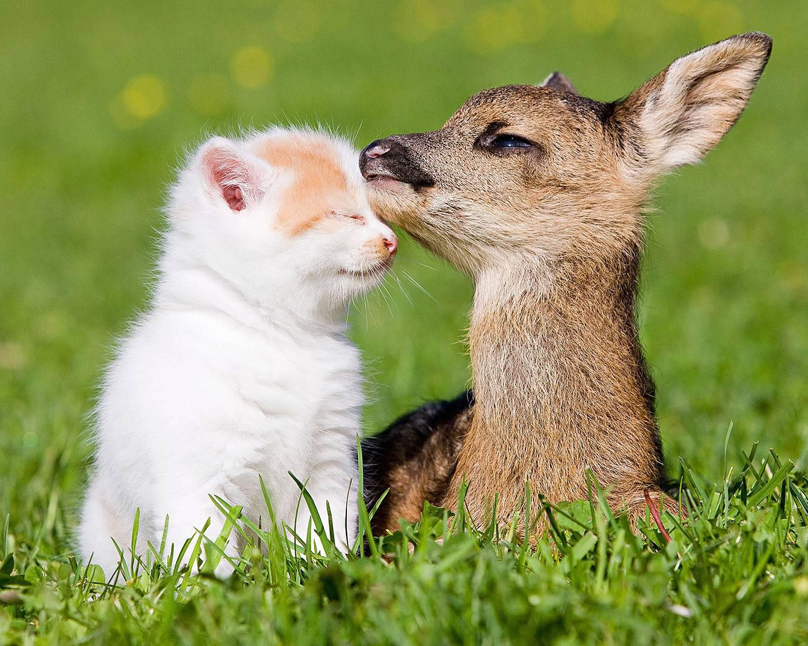 Cat And Deer Hd