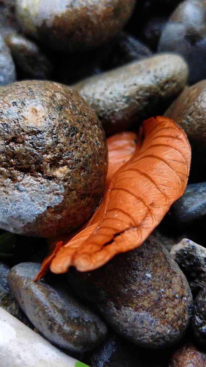 2k fullhd stone leaf