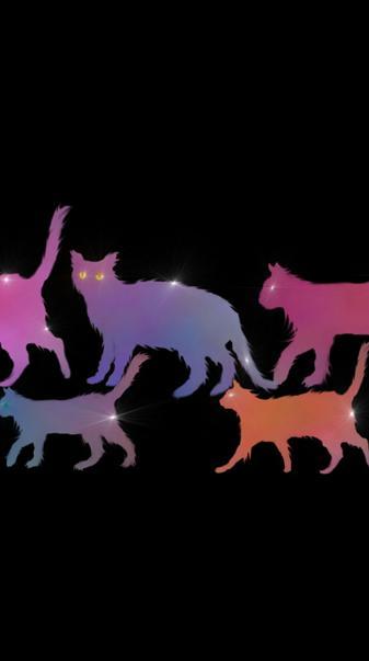 Cats Cats Cats 1
