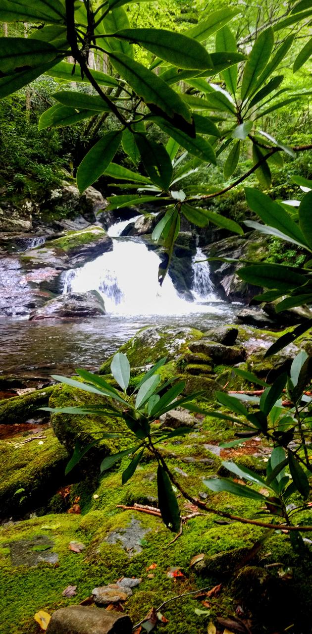 Rhododendron falls