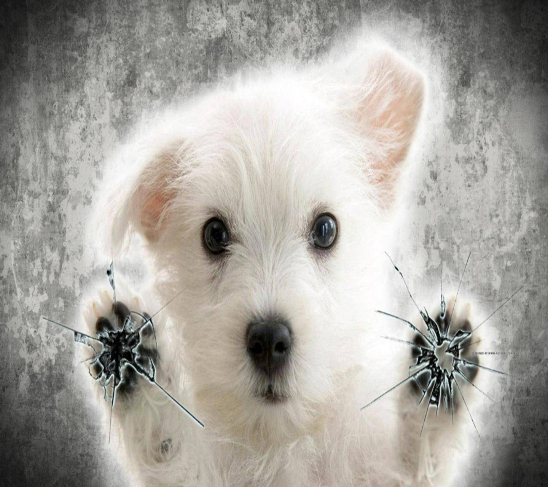 Puppy Pawz
