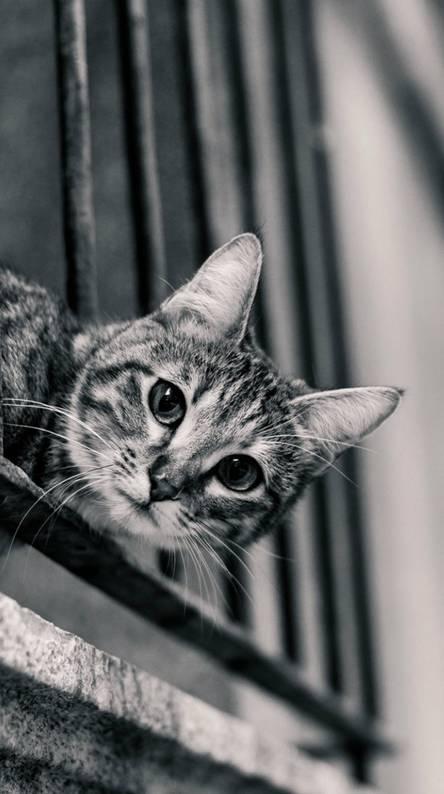 Cat Vintage