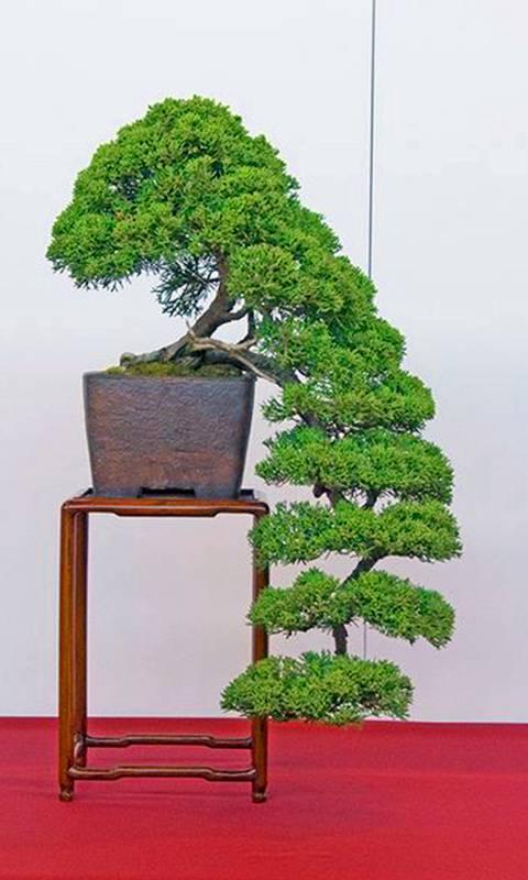 Bonsai dropping tree