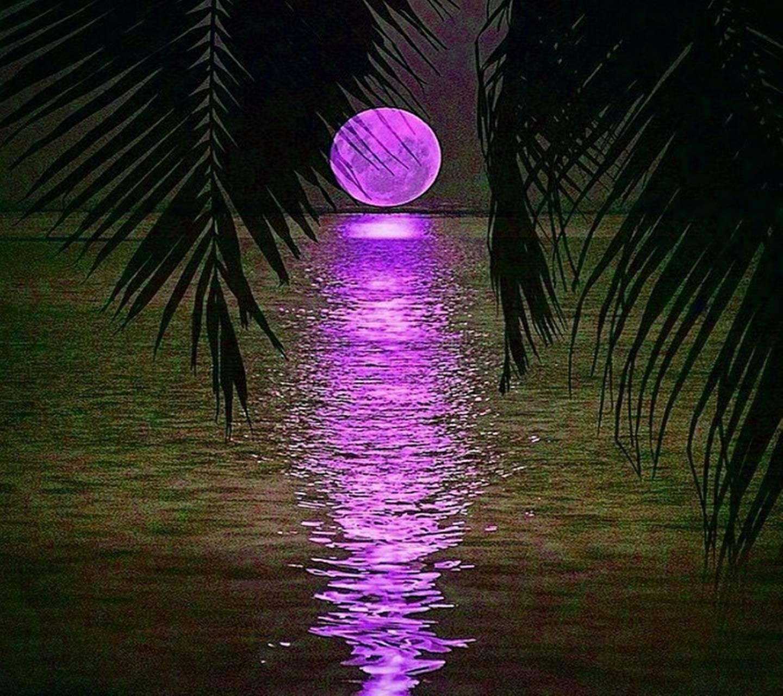Paradise Full Moon