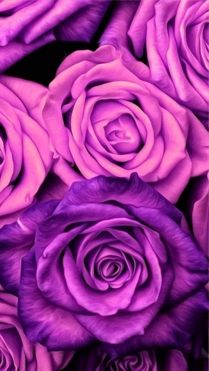 Purple Roses Wallpaper By Perfumevanilla B2 Free On Zedge