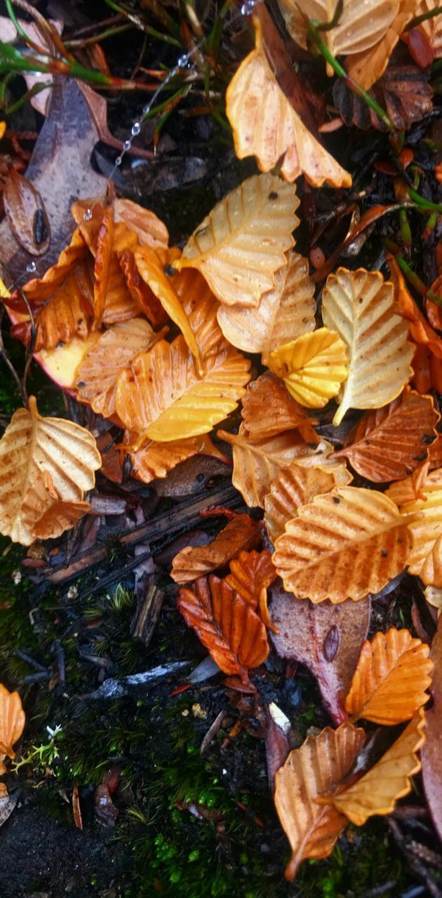 Alpine leaves