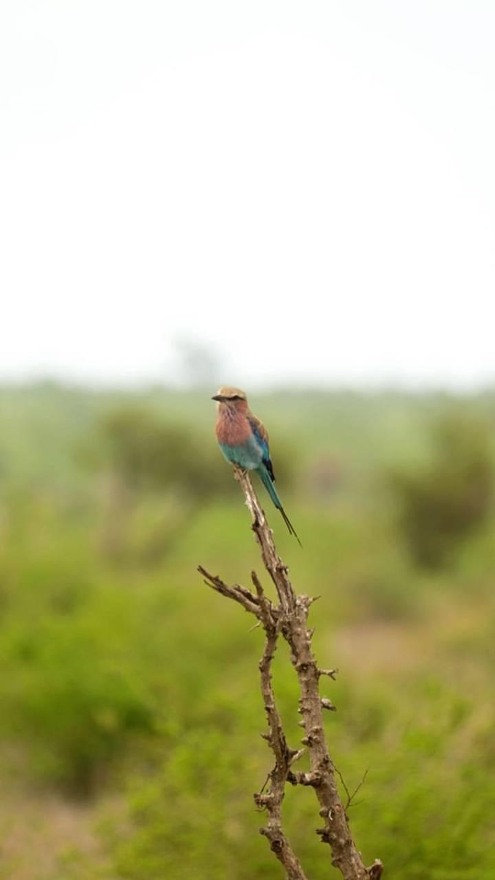 4k Bird