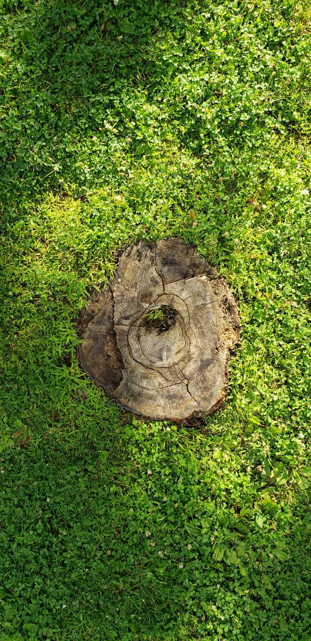 Tree Stump in Grass