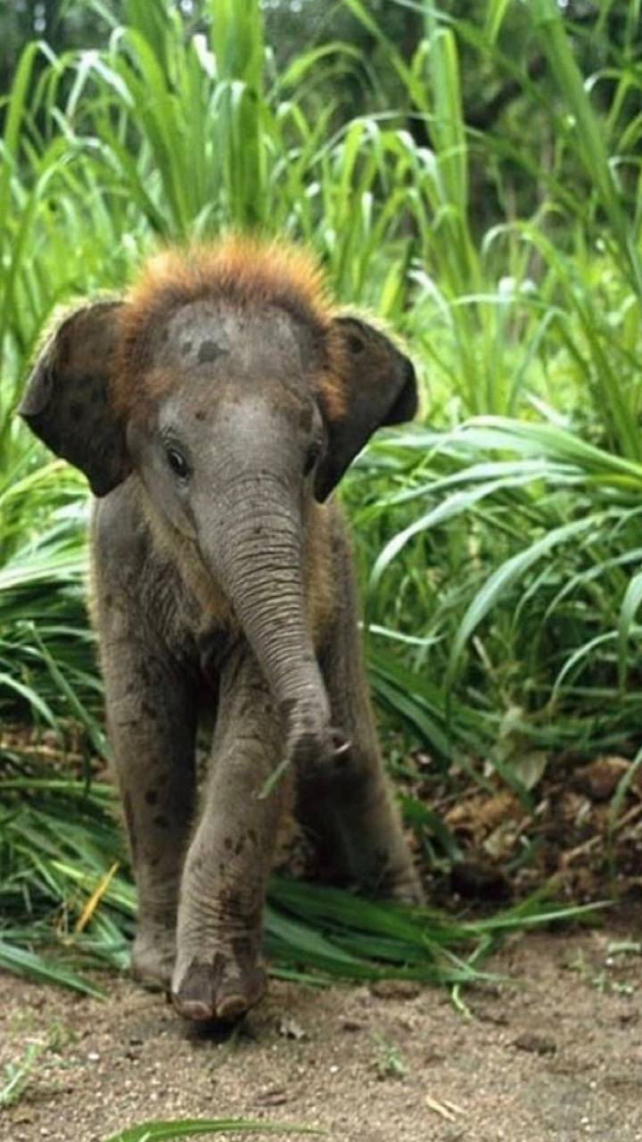 baby elephant wallpaper by tubar - 27 - Free on ZEDGE™