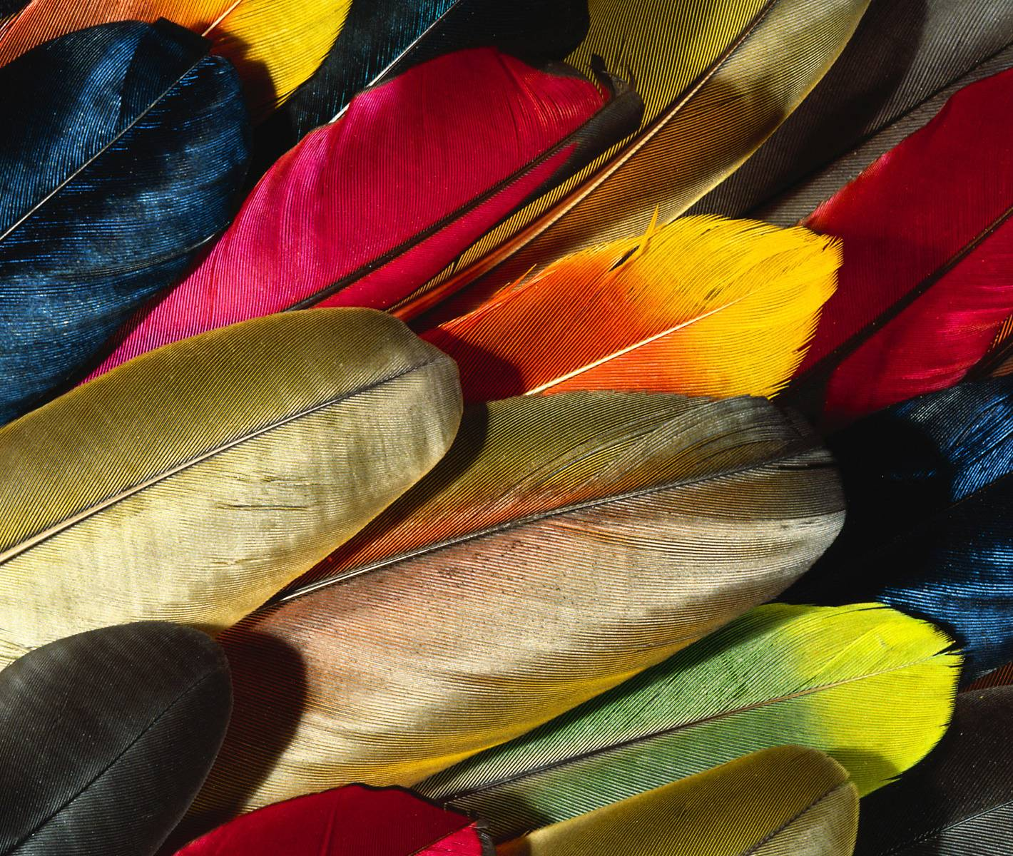 B Feather Colorful