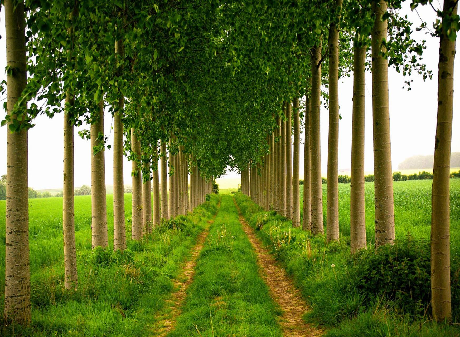 Landscapes trees