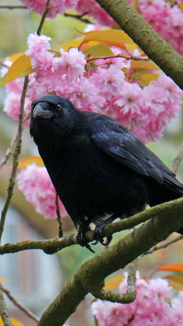 Crow in flowers