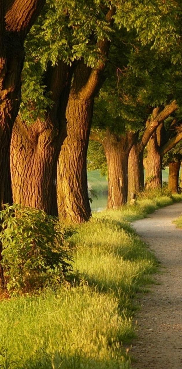 TREES ROAD G