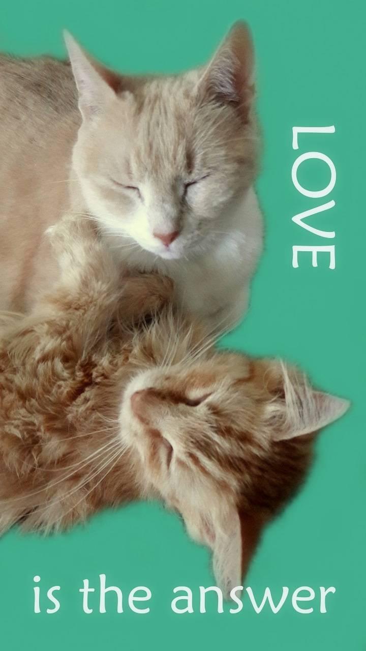 LOVE Kitty Cats