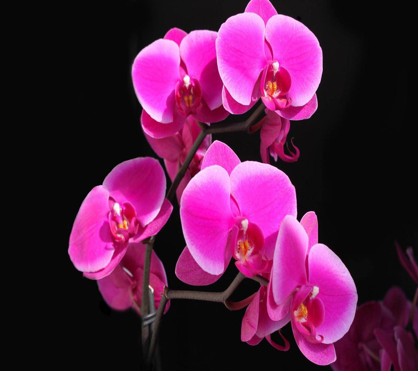Orchid Beautiful