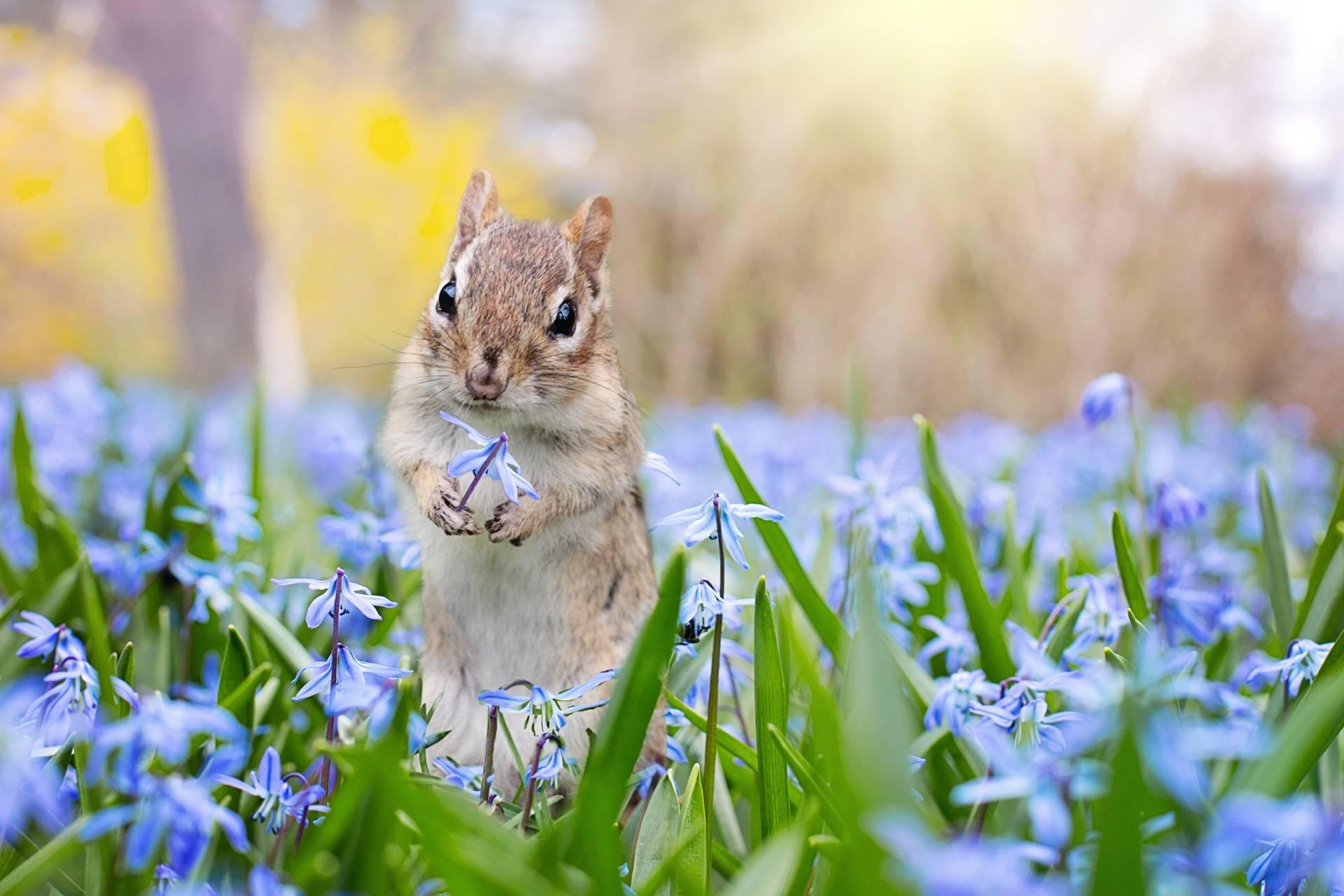 squirrels spring