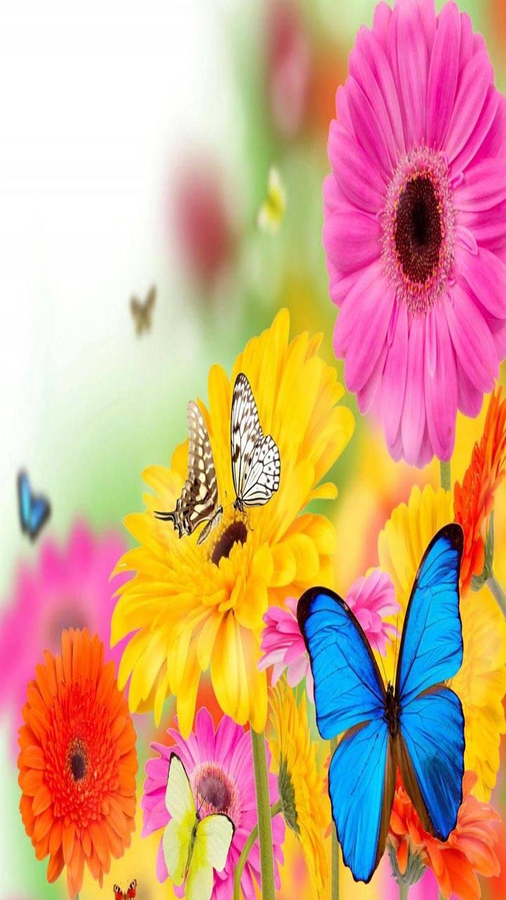 Gerberas Butterflies