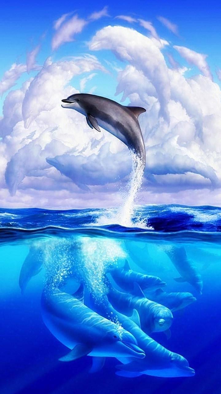Dolphin Fam