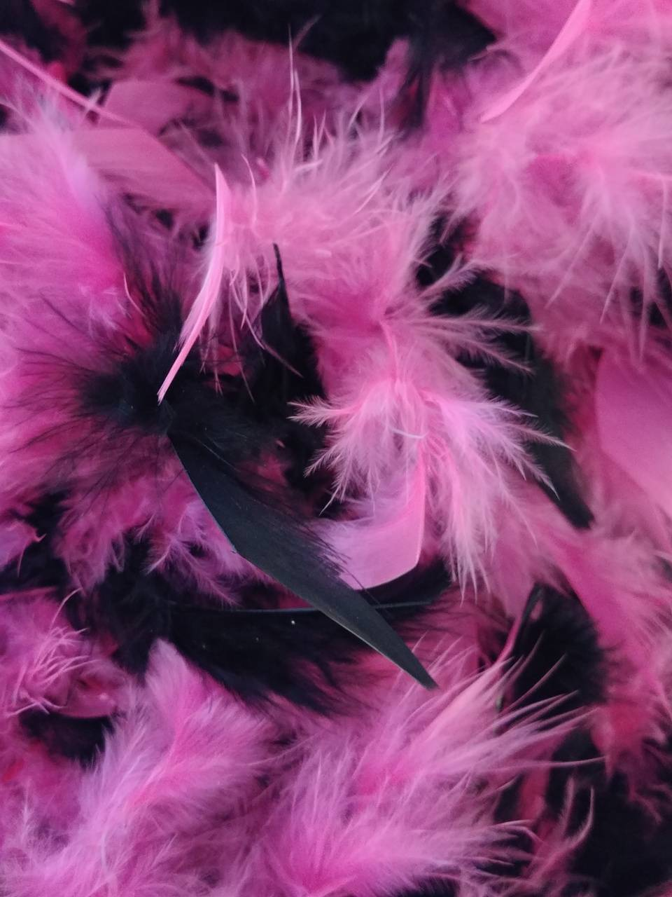 Pink Black Feathers