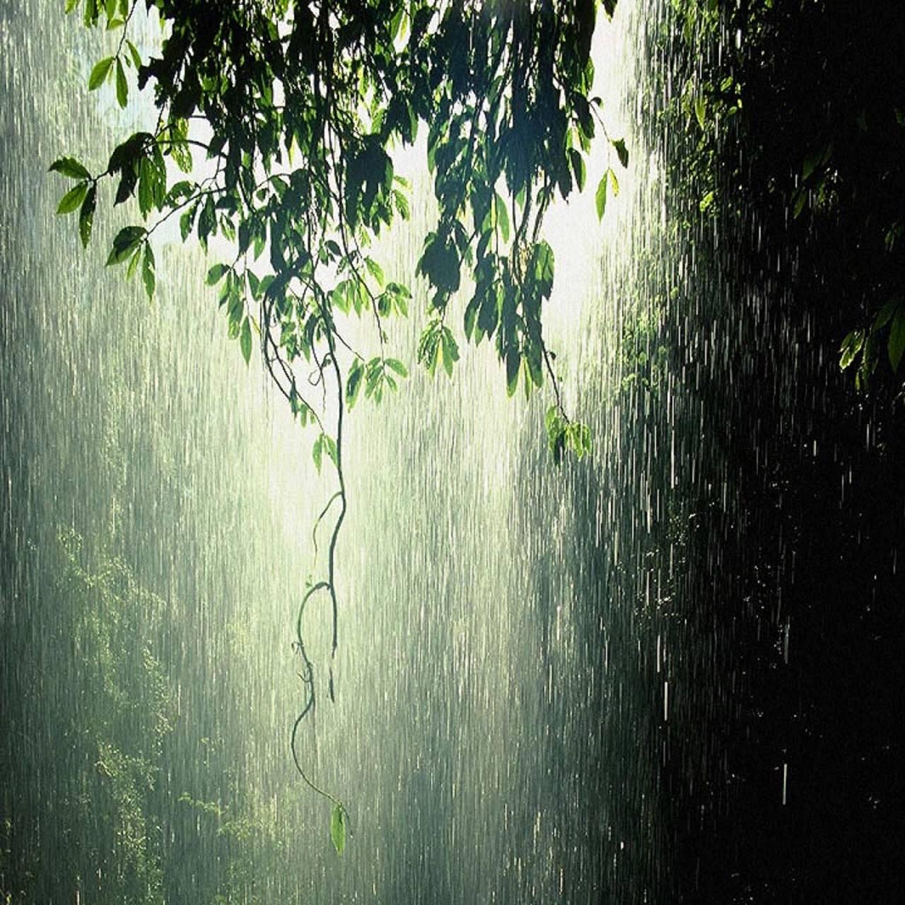 Rainy Greens