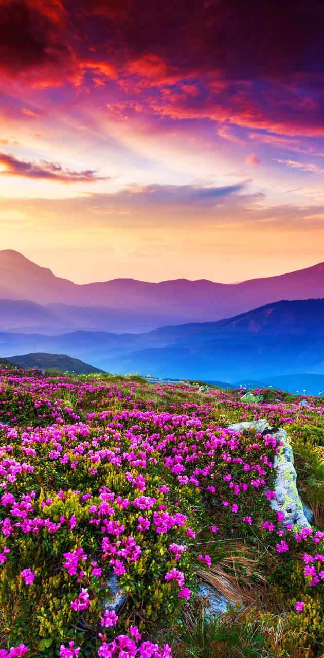 Rhododendron Field