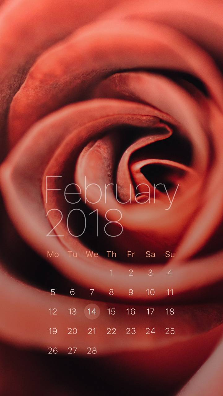 Red Rose Feb