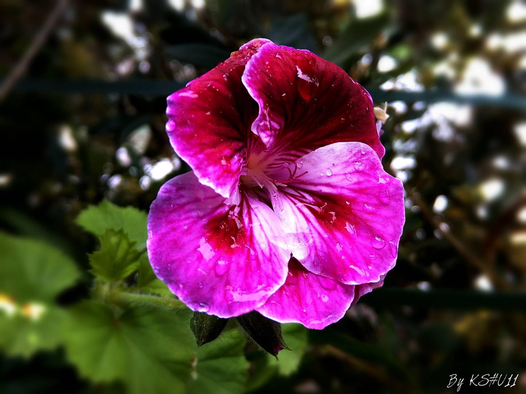 Magnifique fleur