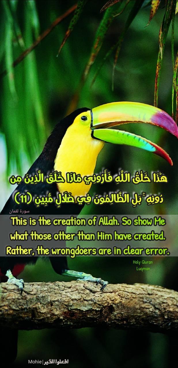 Creation of Allah