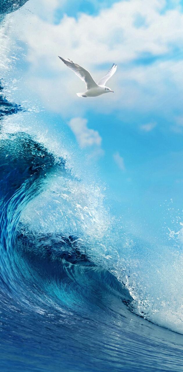 Seagull vs Wave QHD