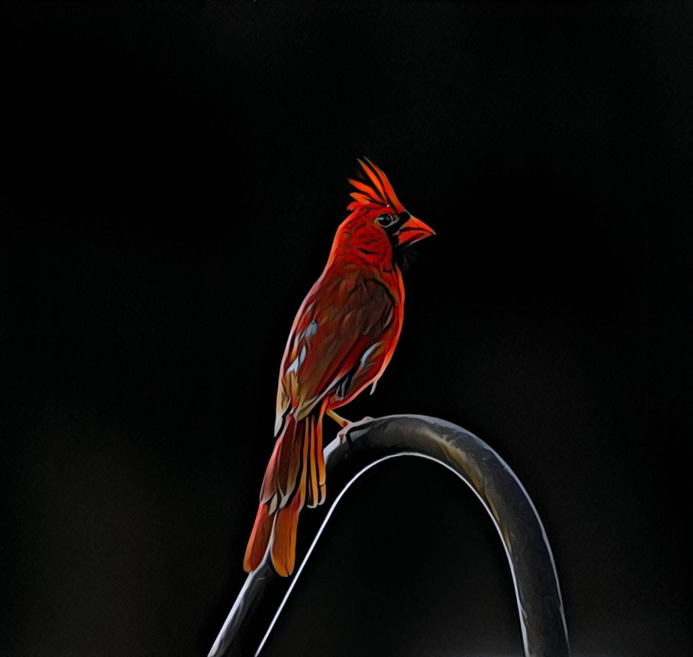 Painted Cardinal