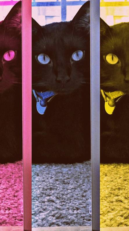 Rainbow black cat