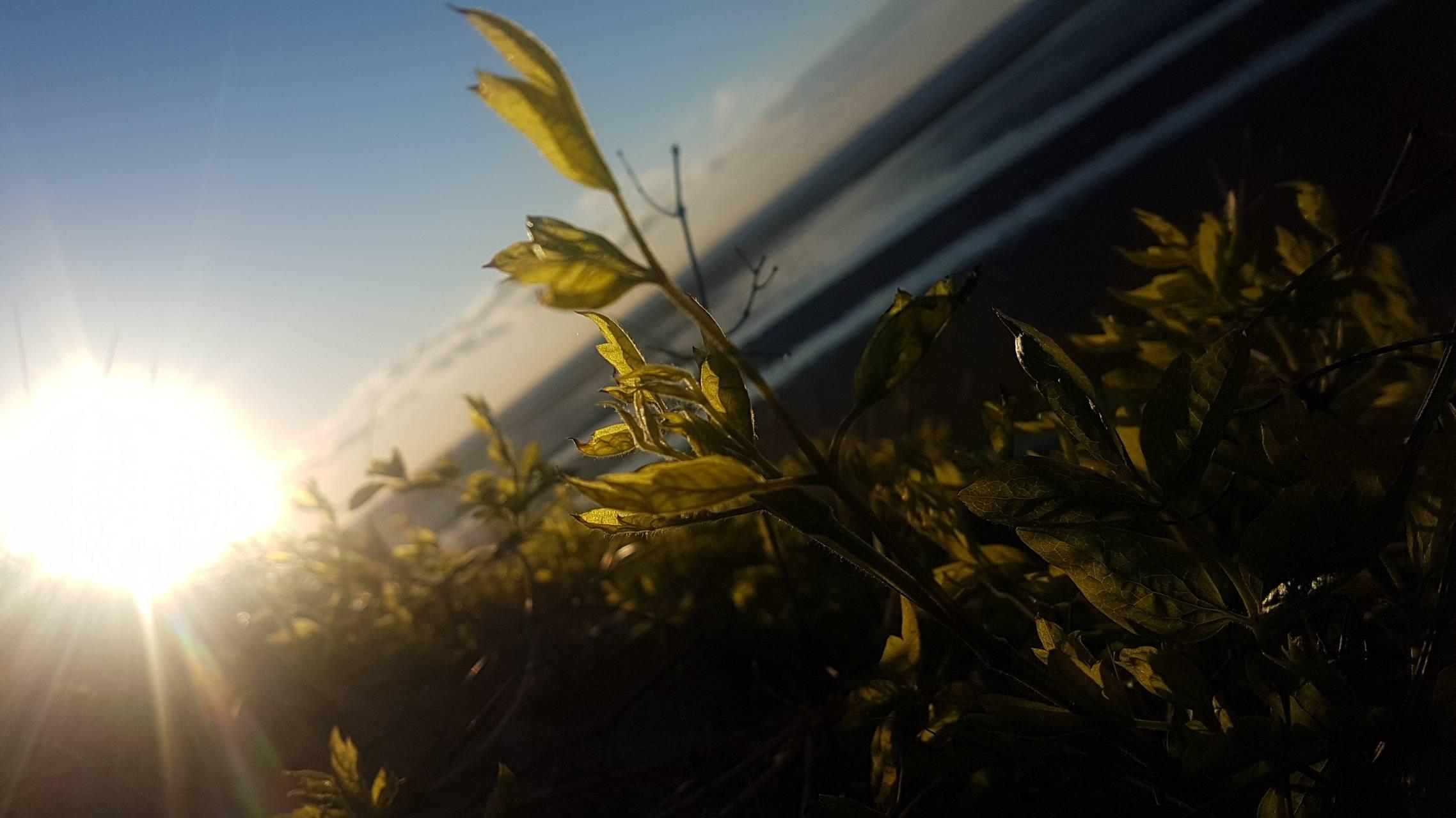 Sunrise Leaves