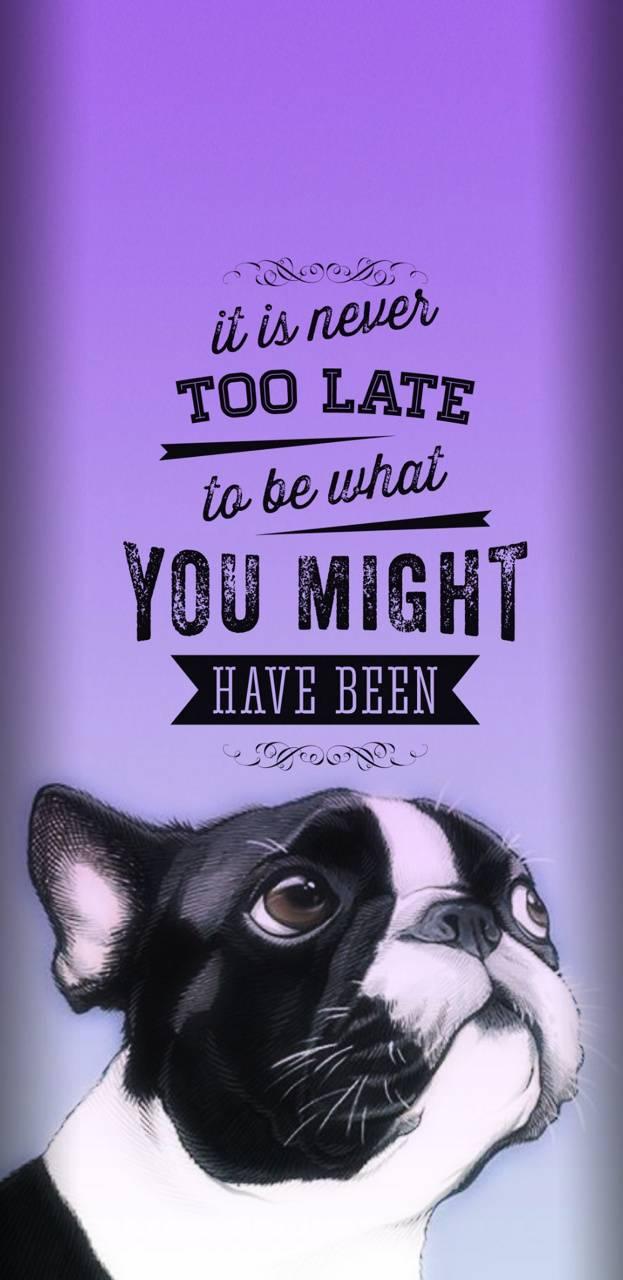 Pug wisdom