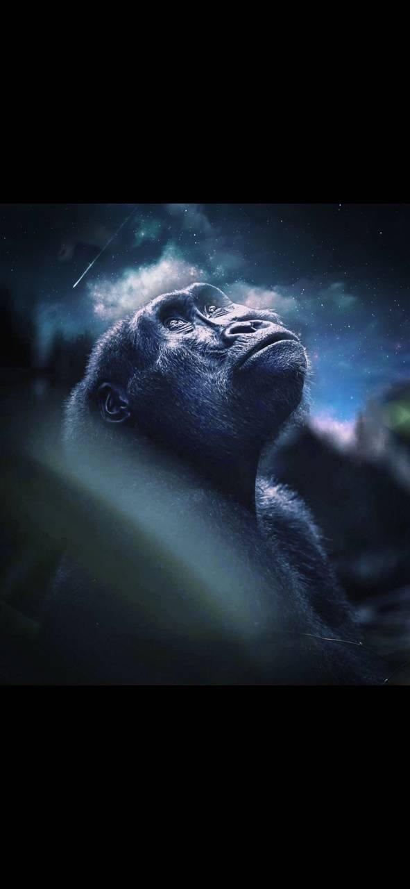 Space chimpanzee