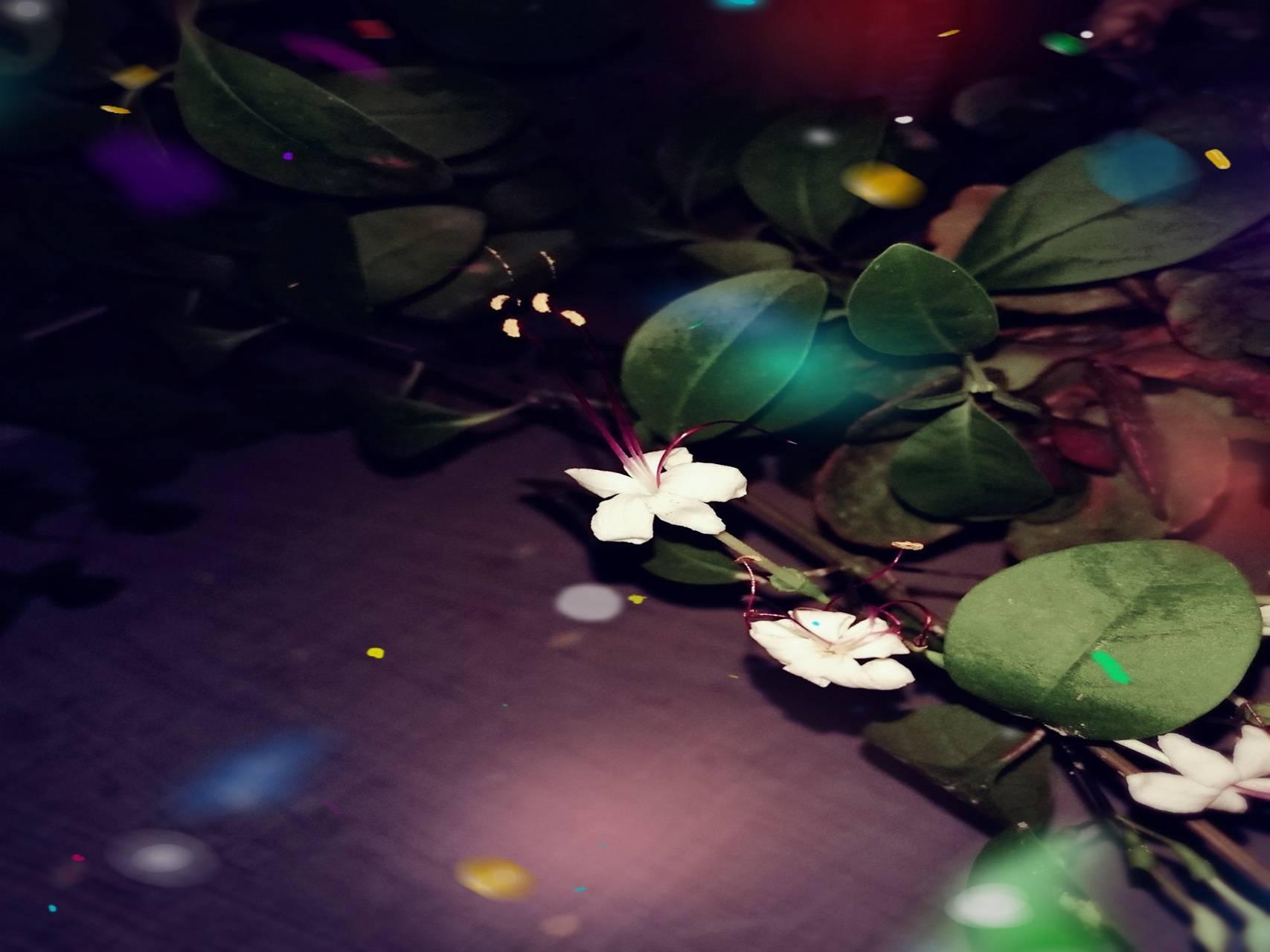 Night Flower Sparkle