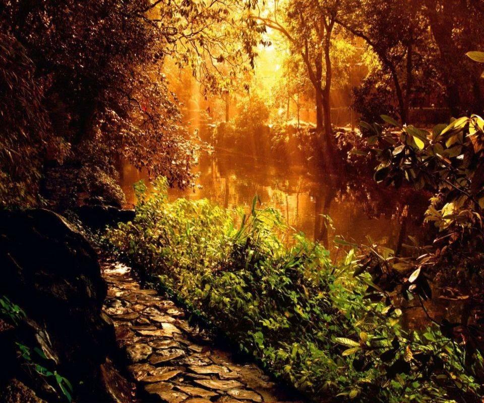Forest Sunshine Hd35