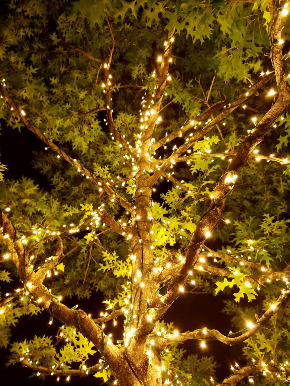 Fairy Lights on Tree