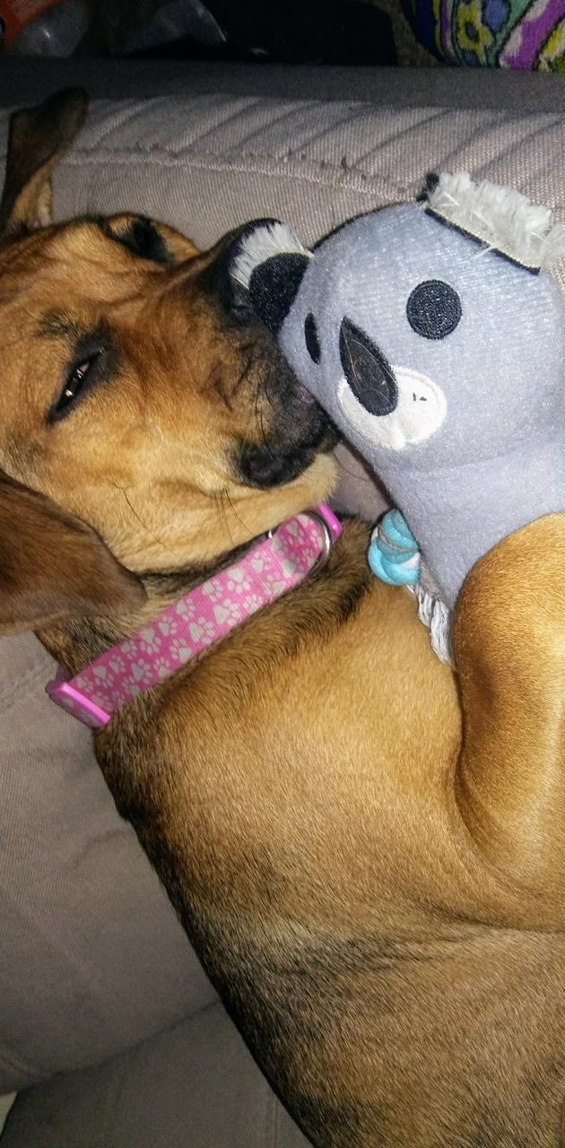 Pup snuggling