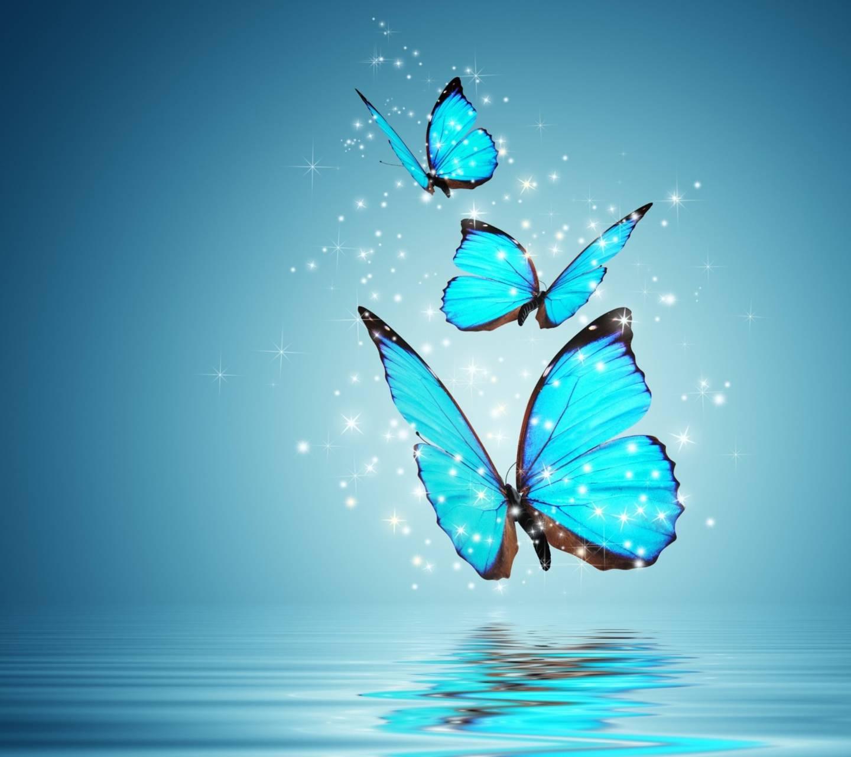 Bule butterfly
