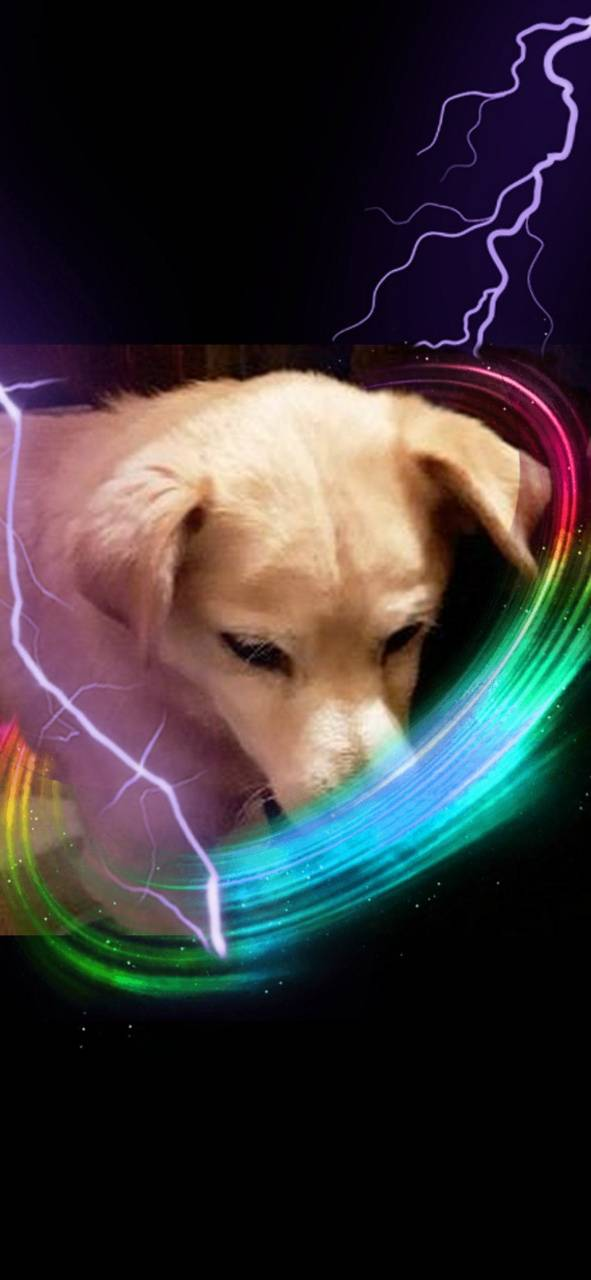 Rainbow sarge
