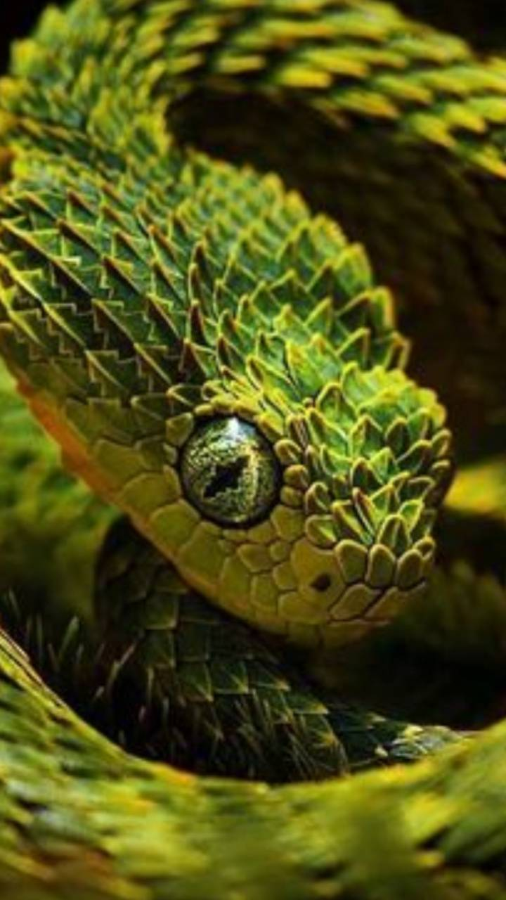 Cool green snakes
