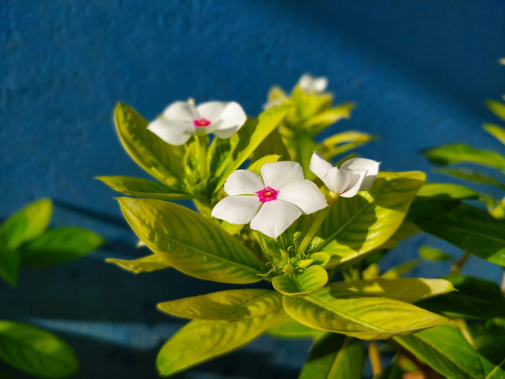 Flower Sunil